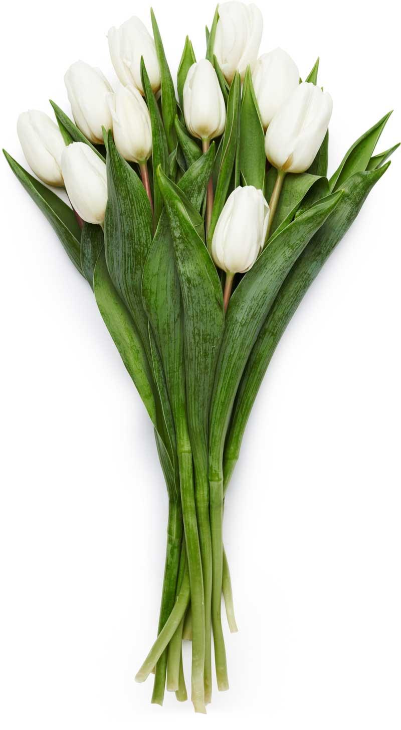 Hvite tulipaner